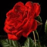 Roja Meeran