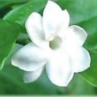 Malleswari from Visakhapatnam