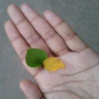 Sameera from Mysore